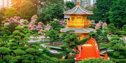 Guldpaviljongen i Nan Lian Garden, Hong Kong. En vacker park att strosa genom.