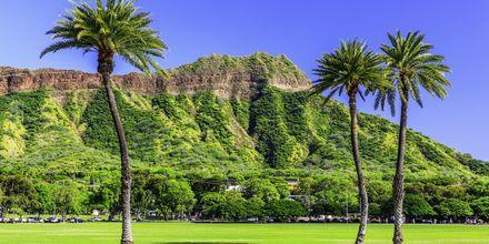 Vulkankratern Diamond Head är synlig från hela staden.