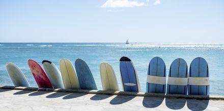 Med höga vågor och många stränder är Honolulu ett perfekt resmål för surfare.