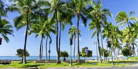 Honolulu är ett härligt resmål tack vare sitt klimat - här är det varmt året om!