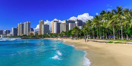 Stranden i Honolulu - Waikiki - och Honolulus skyline.