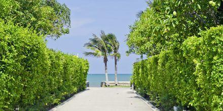 Strand i Hua Hin, Thailand.