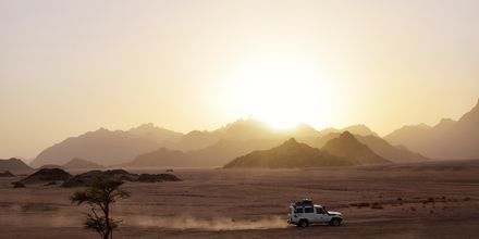 Via Apollos utflykter kan du ta en jeep-tur genom öknen.