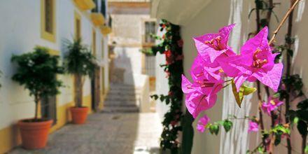 Vacker grönska och gulliga gränder är typiskt Ibiza.