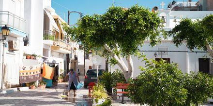 Upplev det äkta grekiska vardagslivet i Ierapetra  på Kreta.