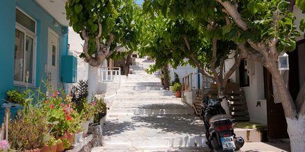 Grönskande trappgång i Ierapetra & Koutsounaris på Kreta.