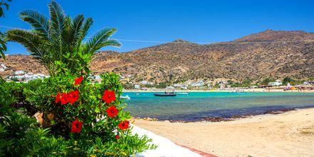 Den kända stranden Mylopotas på Ios, Grekland.