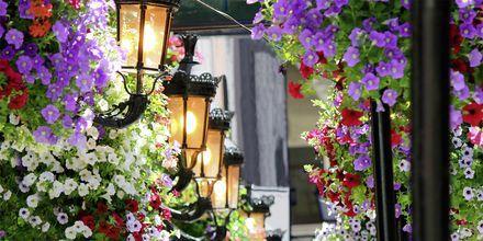 Blomsterdekorerade pubar på Irland.
