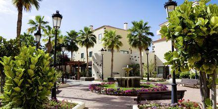 Trädgården på hotell Isabel i Playa de las Americas på Teneriffa.