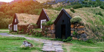 Traditionella isländska hus med gräs på taket.