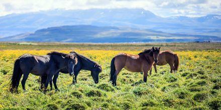 Island har ett rikt djur- och naturliv.