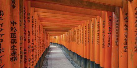 Fushimi Inari Shrine är en känd sevärdhet i Kyoto, Japan.