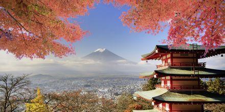 Japans högsta berg, Fuji, och ett vackert tempel.