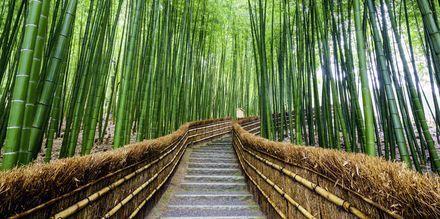 Bambugång i skogen Arashiyama i Kyoto, Japan.