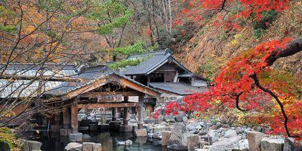 Onsen, en varm källa, vid Takaragawa, Japan.