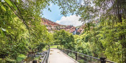 Naturreservatet Walter Sisulu Botanical Garden i Johannesburg är en lugn oas.