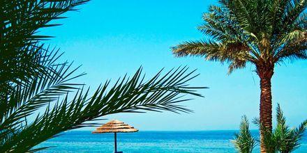 Tala Bay i Aqabaområdet i Jordanien.