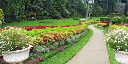 Den botaniska trädgården i Peradeniya, Kandy.