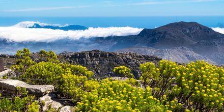 Taffelberget, eller Table Mountain som det heter på engelska, sträcker sig 6 mil längst kusten.