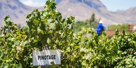 För den som gillar vin är Sydafrika och Kapstaden ett perfekt resmål.