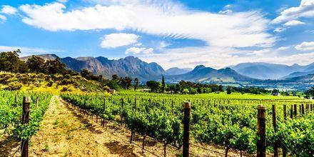 Den första vingården i Kapstaden etablerades redan 1652.