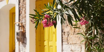Charmiga detaljer i Karlovassi på Samos, Grekland.