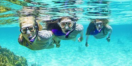 Boka någon av Apollos snorkelutflykter.