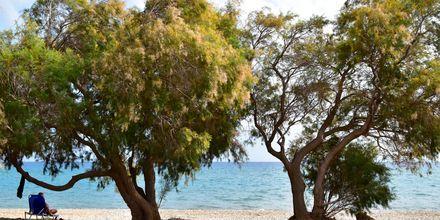 Stranden vid hotell Katerina i Pythagorion på Samos, Grekland.