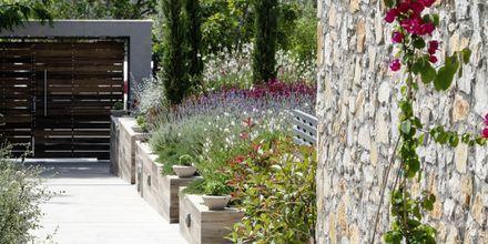 Hotell KB Ammos på Skiathos, Grekland.