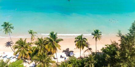 Coconut Beach, Khao Lak, Thailand.