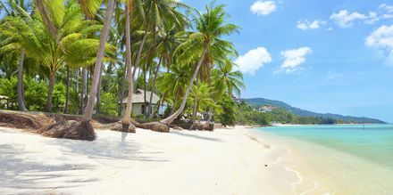 Stranden Bang Por ligger på nordvästra delen av Koh Samui och kantas av höga palmer.