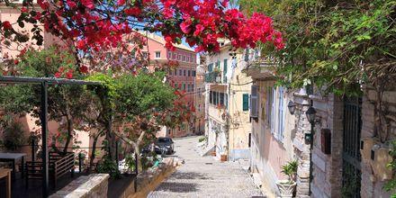 Blomstrande gränder i Korfu stad, Grekland.