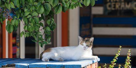 Lata dagar i solen på Kos, Grekland.