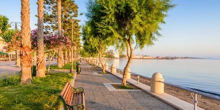 Hamnpromenaden  i Kos stad, Grekland.