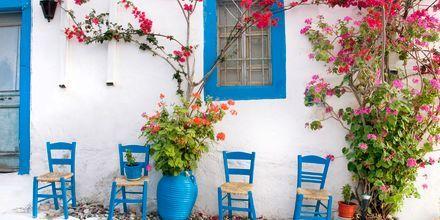 Kos i Grekland.