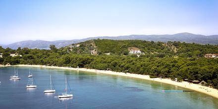 Koukounaries på Skiathos, Grekland.