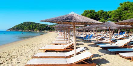 Kokounaries-stranden på Skiathos, Grekland.