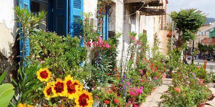 Blomstrande omgivningar längs huvudgatan i Paleochora på Kreta.