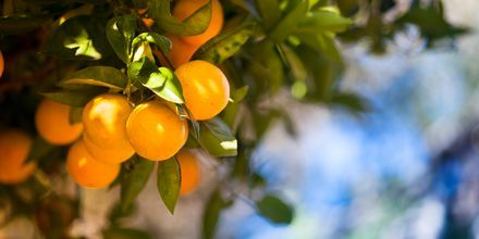 Solmogna apelsiner.