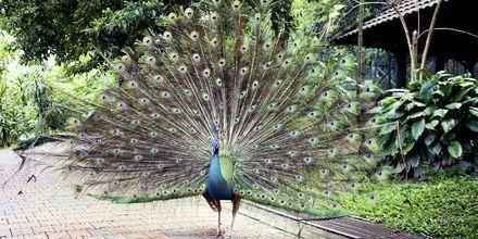 Kuala Lumpur har en fågelpark med 200 arter och 3000 fåglar.