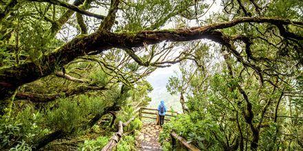 Nationalparken Garajonays ligger i de centrala och norra delarna av La Gomera.