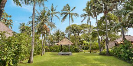 Trädgård på hotell Legian Beach i Kuta på Bali.