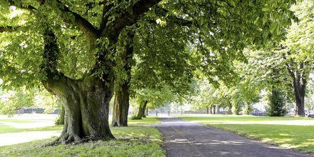 Hyde Park i London.