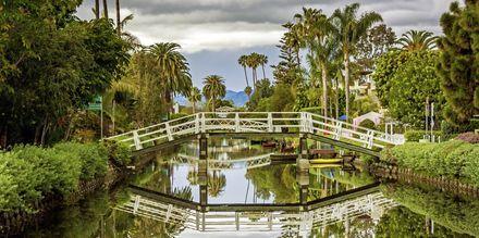 Venice Beach är ett himla gulligt område i Los Angeles.