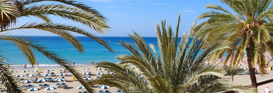 Palmkantad strandpromenad i Los Cristianos på Teneriffa.