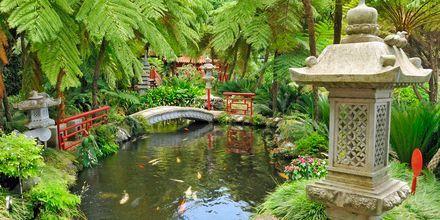 Japanska trädgården på Madeira i Portugal.