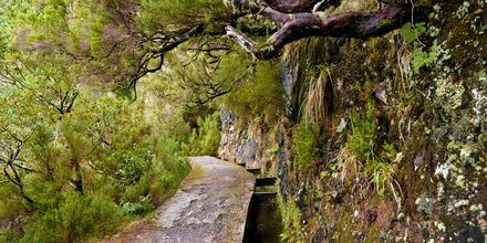 Levadorna på Madeira användes förr för vattna jorden. Idag är de populära vandringsleder.