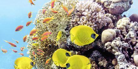 Under Röda havets yta väntar en färgsprakande värld att upptäcka!