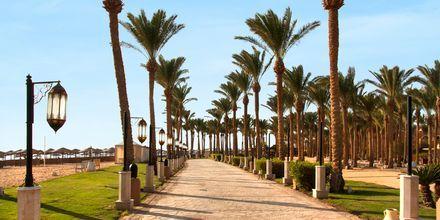 Strandpromenaden i Makadi Bay, Egypten.