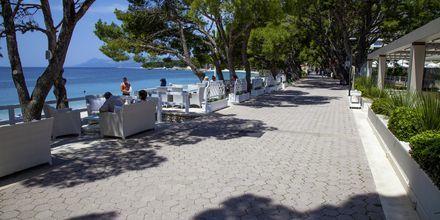 Strandpromenaden i Makarska, Kroatien.